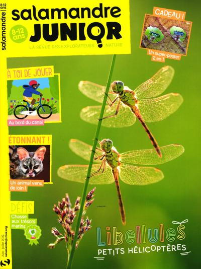 Salamandre Junior - N°122